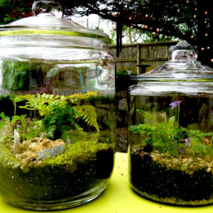 Fairy gardens, closed terrariums
